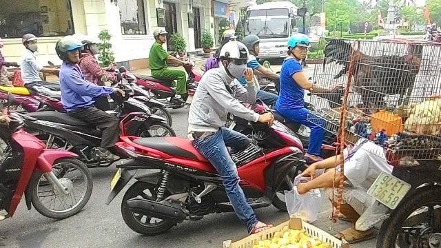 Người dân Huế tò mò vì lần đầu tiên được thấy gà Đông Tảo