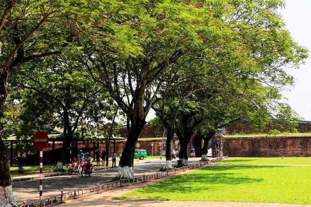 Hàng cây phượng râm mát dẫn vào Đại Nội