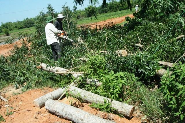 Người dân thôn Đồng Xuân đang cưa cây ngã do lốc