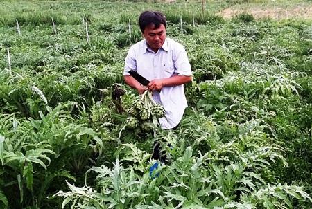 Nông dân phấn khởi thu hoạch atiso