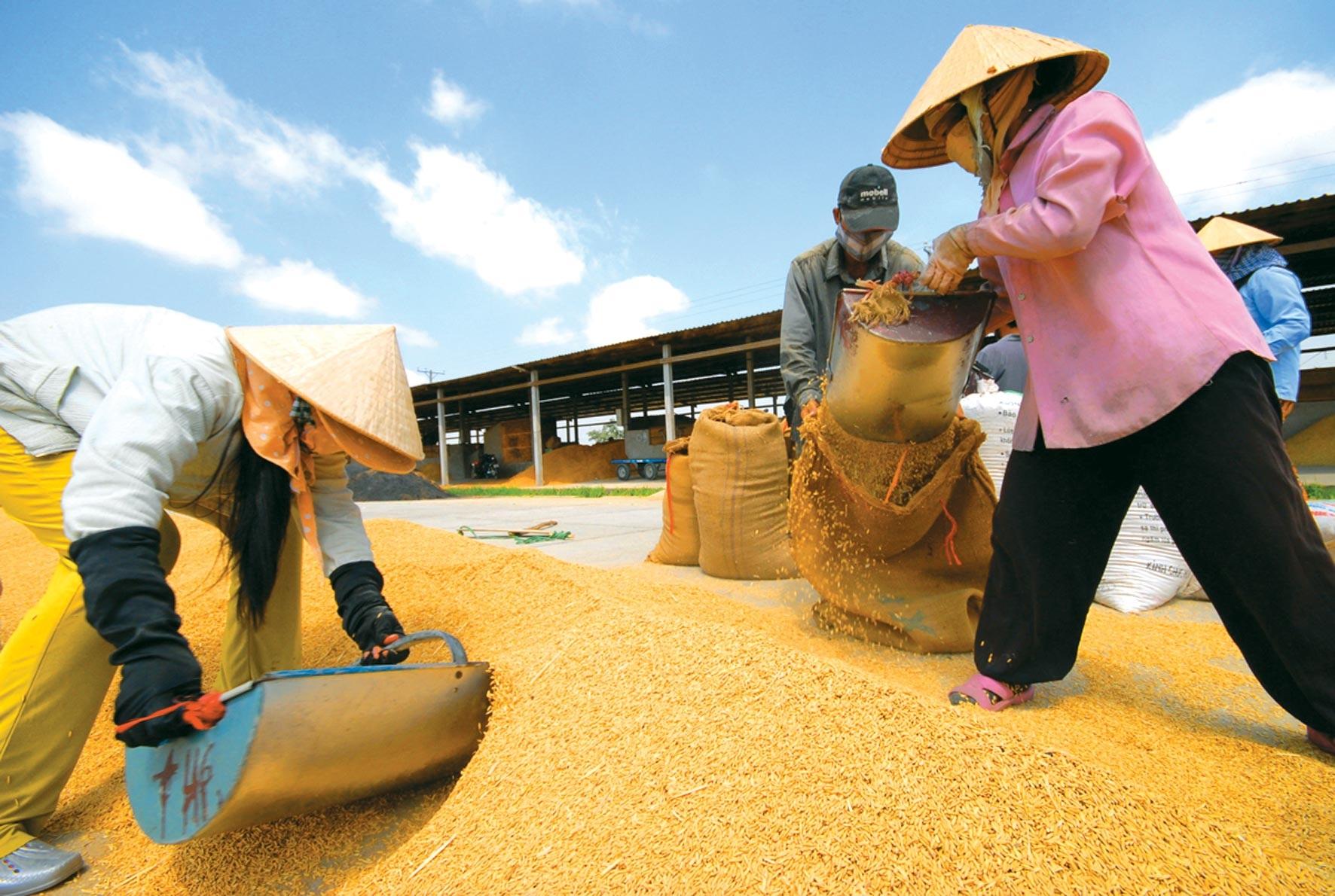 Hiến kế để gạo Việt thành thương hiệu hàng đầu thế giới