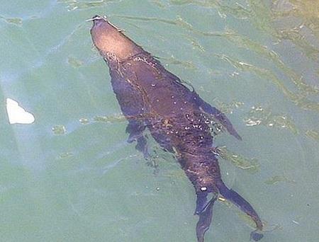 Cô bồ Shakira của Pique bị sư tử biển tấn công - 1