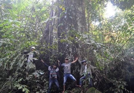 Gốc cây lớn ước chừng 10 người ôm