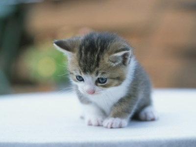 """Bài văn bị điểm 4 vì coi mèo là... """"người bạn"""" - 1"""