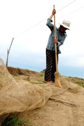 Chùm ảnh: Cào hến trên phá Tam Giang - 10