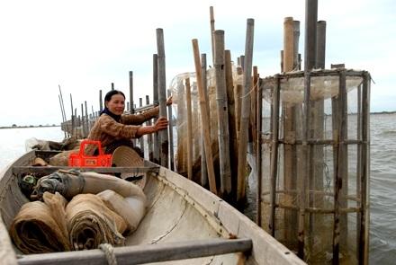 Chùm ảnh: Cào hến trên phá Tam Giang - 7