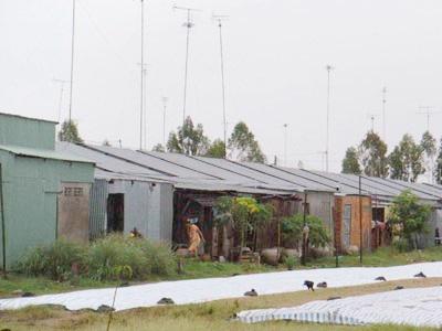 Tăng mức vay làm nhà cho dân vùng ngập lũ  - 1