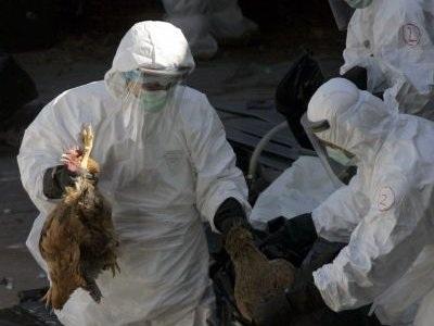 Bùng phát ổ dịch cúm gia cầm gần biên giới Việt Nam - 1