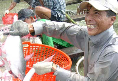 Xuất khẩu cá tra 2011 dự tính trên 1,55 tỷ USD - 1