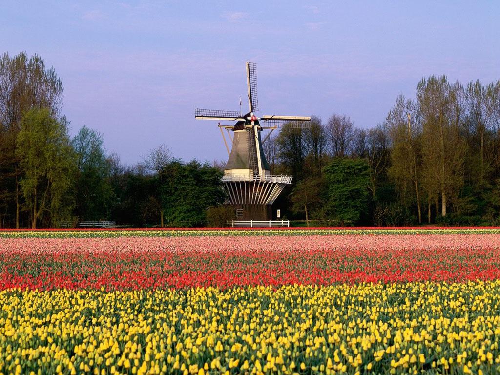 """Đến Hà Lan thưởng thức """"Vườn châu Âu"""" - 5"""