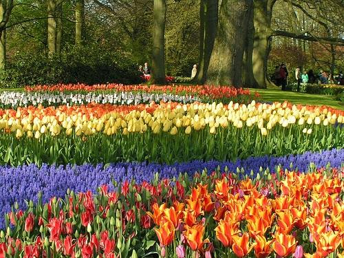 """Đến Hà Lan thưởng thức """"Vườn châu Âu"""" - 2"""