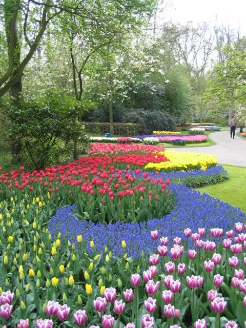 """Đến Hà Lan thưởng thức """"Vườn châu Âu"""" - 1"""