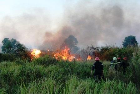 Ẩn họa khôn lường từ những vụ cháy cỏ  - 3