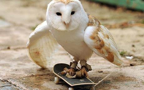 Cú trượt ván điệu nghệ - 1