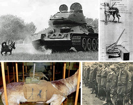 """9 phát minh vũ khí chiến tranh """"kỳ lạ"""" nhất - 2"""