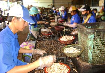 Việt Nam tham gia sáng lập Hiệp hội điều thế giới - 1