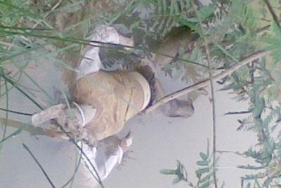 Phát hiện một xác phụ nữ trôi trên sông - 1