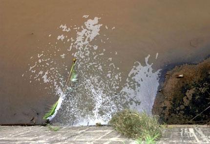 """Hãi hùng những miệng cống """"nhả"""" nước đen ra sông Hồng - 1"""