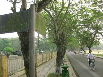 Hàng loạt bảng tên đường bị phủ rêu xanh - 2
