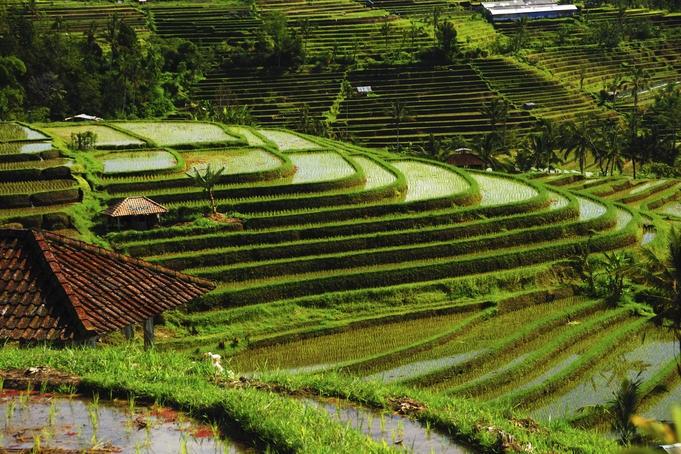 Bali - thiên đường nhiệt đới - 2