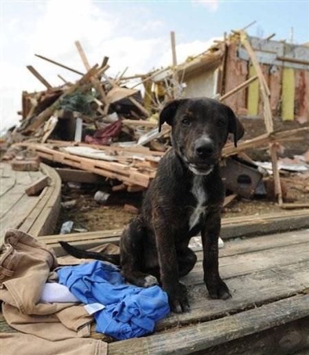 Mỹ: Lốc xoáy càn quét Mississippi, 10 người chết - 5