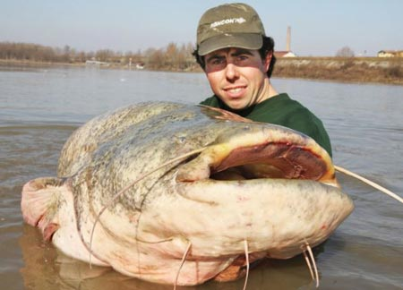Câu được cá nước ngọt nặng 113 kg - 3
