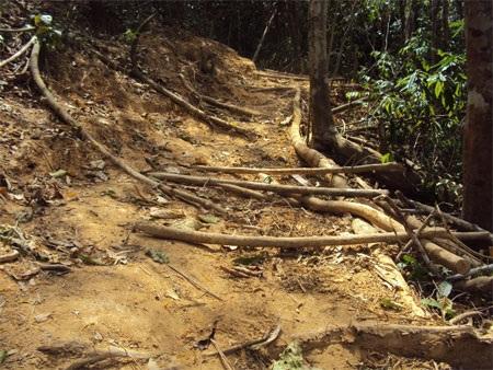 """Cận cảnh cánh rừng đang """"hấp hối"""" vì lâm tặc - 1"""