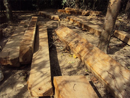"""Cận cảnh cánh rừng đang """"hấp hối"""" vì lâm tặc - 2"""