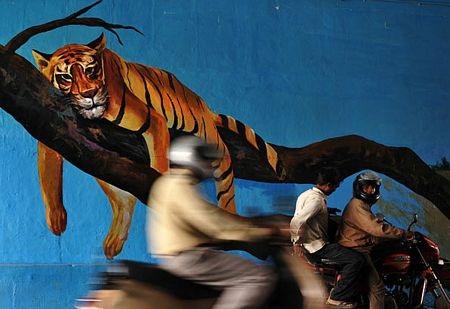 Kho bích hoạ sống động trên đường phố Bangalore - 5