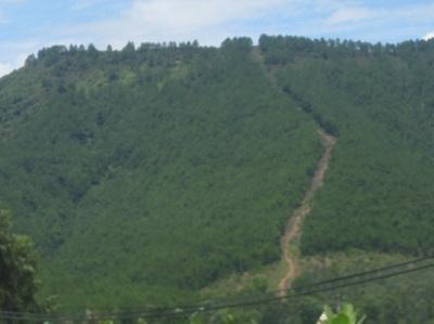 Phát hiện xác chết trên đồi sim sau 6 tháng mất tích - 1