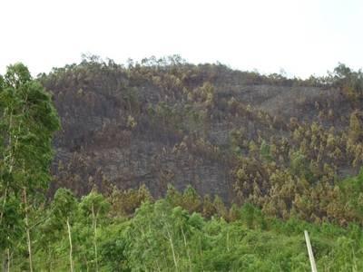 Nguy cơ cháy rừng vì đốt thực bì, đốt ong - 3