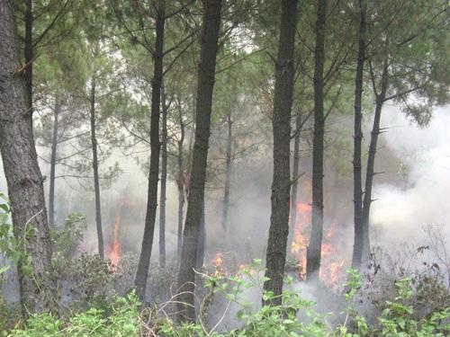 Nguy cơ cháy rừng vì đốt thực bì, đốt ong - 4