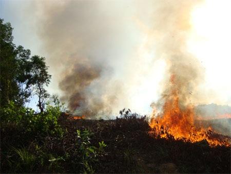 Nguy cơ cháy rừng vì đốt thực bì, đốt ong - 2