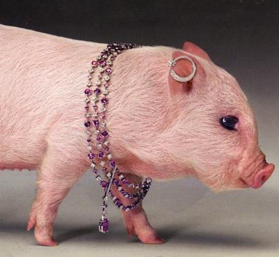 Lợn làm… người mẫu trang sức - 3