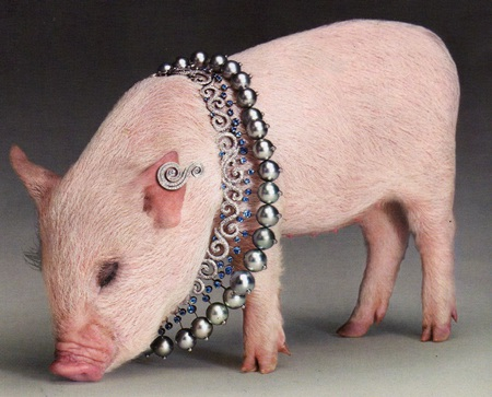 Lợn làm… người mẫu trang sức - 5