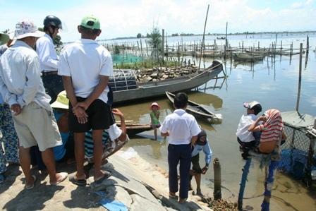 """Hải cẩu """"lưu lạc"""" vào vùng biển Thừa Thiên - Huế - 7"""
