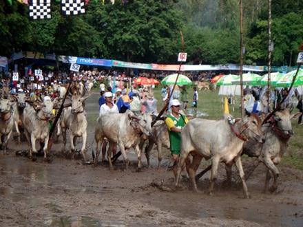 Náo loạn hy hữu tại trường đua bò Bảy Núi  - 2
