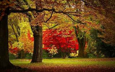colorsofautumn10.jpg