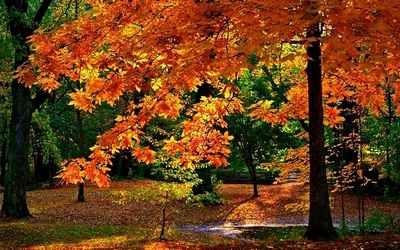 colorsofautumn11.jpg