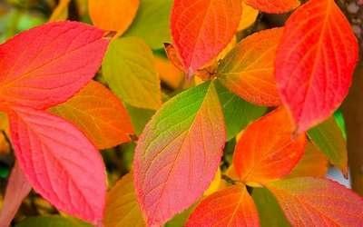 colorsofautumn15.jpg
