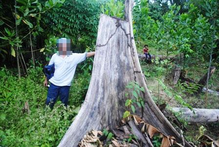 Bất lực nhìn lâm tặc rầm rộ phá rừng - 7