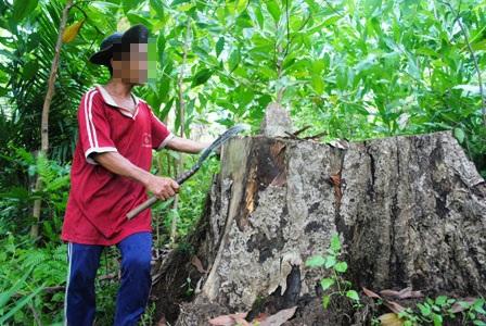 Bất lực nhìn lâm tặc rầm rộ phá rừng - 6
