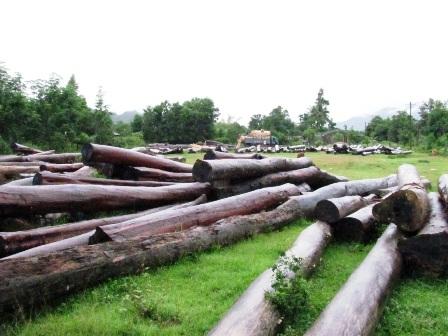 Bất lực nhìn lâm tặc rầm rộ phá rừng - 4