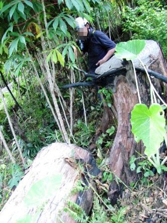 Bất lực nhìn lâm tặc rầm rộ phá rừng - 8