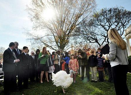 """Tổng thống Obama """"ân xá"""" cho gà tây - 3"""