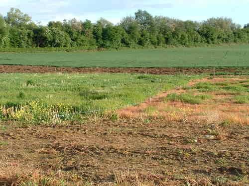 Báo cáo Chính phủ kết quả kiểm kê đất đai trong tháng 8 tới - 1