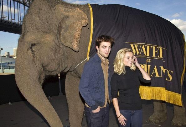 "Robert Pattinson - Reese Witherspoon: ""Đọ dáng"" với voi - 2"