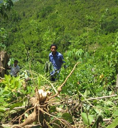 Heo rừng tấn công người, quậy phá thôn bản - 1