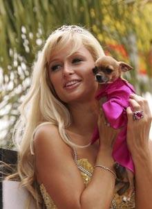 Xuất hiện Paris Hilton giả - 1