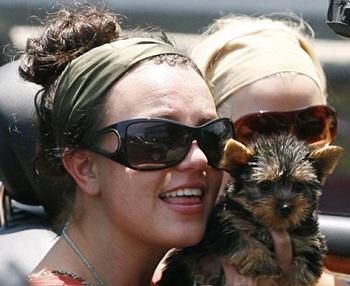 Vệ sỹ của Britney Spears tấn công thợ săn ảnh - 2